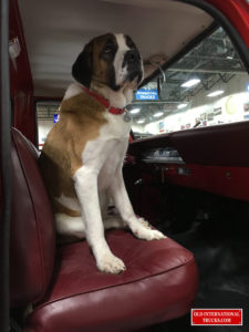 "Peaches likes the  the new truck. <div class=""download-image""><a href=""https://oldinternationaltrucks.com/wp-content/uploads/2018/02/IMG_1991.jpg"" download><i class=""fa fa-download""></i> <span class=""full-size""></span></a></div>"